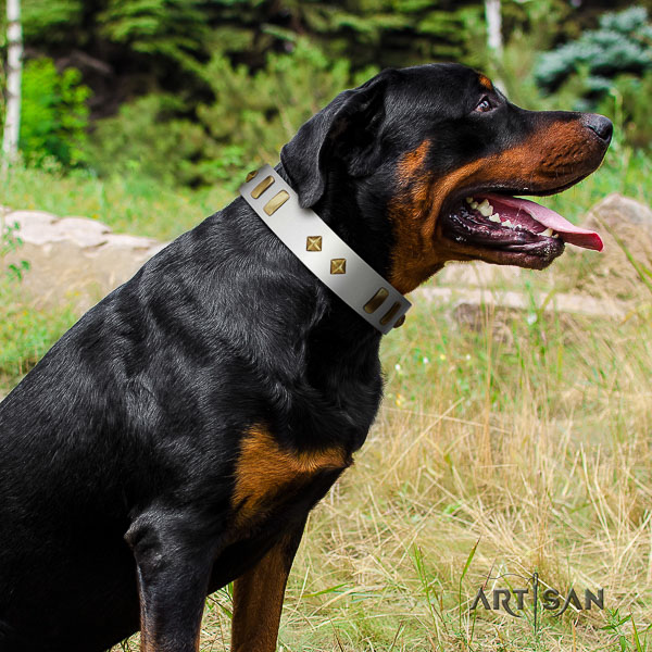 Rottweiler daily use leather collar for your attractive four-legged friend