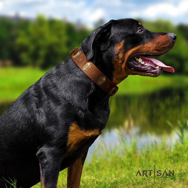 Rottweiler comfortable wearing natural leather collar for your beautiful canine