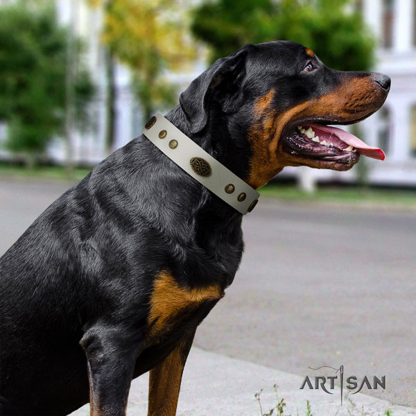 Rottweiler adjustable full grain genuine leather dog collar with fashionable studs