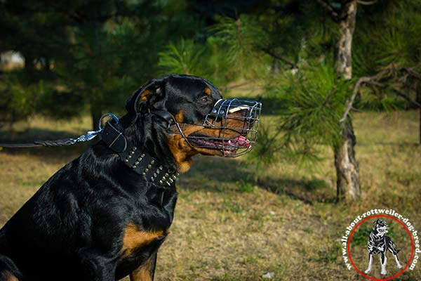 Rottweiler black leather collar of classic design with nickel plated fittings stylish-walks