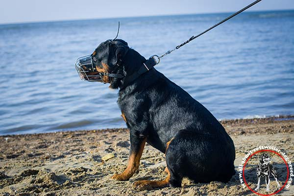 Rottweiler leather collar with rust-resistant fittings quality-control