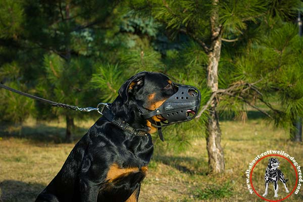 Rottweiler black leather collar with rust-free hardware stylish-walks