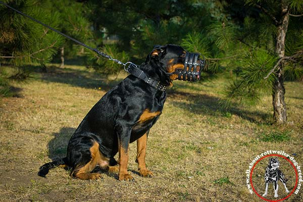 Rottweiler black leather collar of high quality with riveted fittings   for-walking