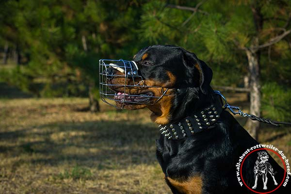 Rottweiler black leather collar adjustable  decorated with spikes and studs  for-any-activity