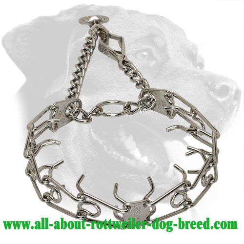 Effective Rottweiler Pinch Collar for Obedience Training