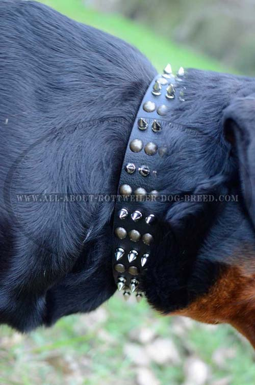 Metal Spikes and Studs on Designer Leather Dog Collar