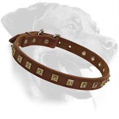 Rottweiler Leather Dog Collar with studs