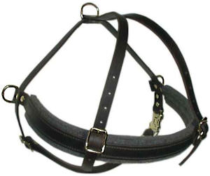 Rottweiler leather dog harness( handmade leather harness)