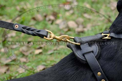 Golden Brass D-Ring on Leather Dog Harness for Easy Attachment of the Leash