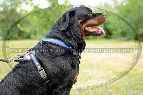 Comfortable American Pride Leather Rottweiler Harness