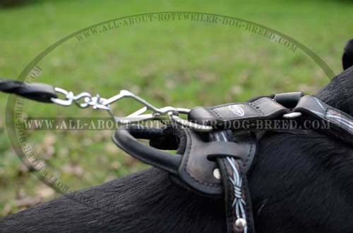 Exclusive Rottweiler Leather Harness
