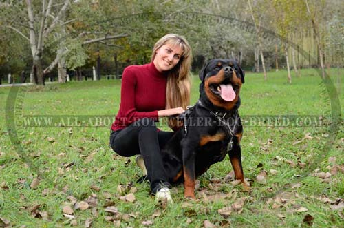 Comfortable Rottweiler Leather Harness