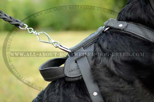 Rust Resistant D-Ring on Back Plate of Leather Dog Harness for Lead Attachment