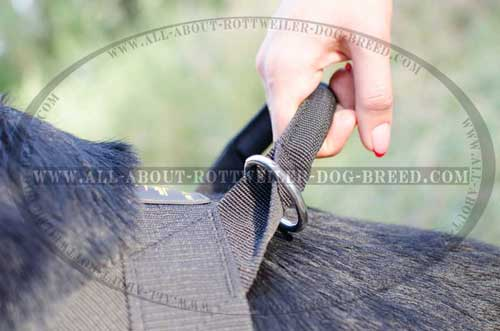 Easy Grab Handle with Nickel Plated Floating Ring on Nylon Dog Harness