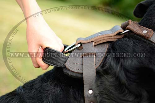 Extra Strong Handle on Multipurpose Leather Dog Harness