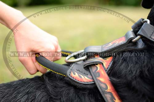 Strong Handle of Painted Leather Dog Harness for Rottweiler