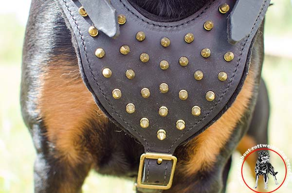 Leather dog harness for Rottweiler with spiked chest plate