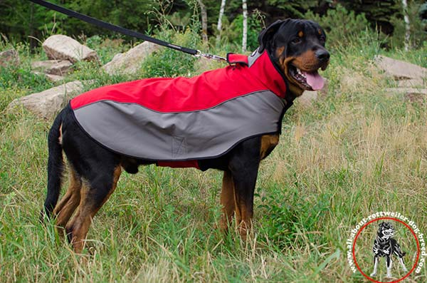 Extraordinary nylon Rottweiler coat