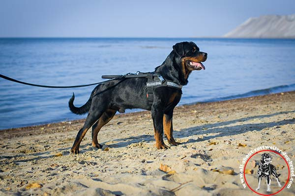 All-weather nylon Rottweiler guide harness