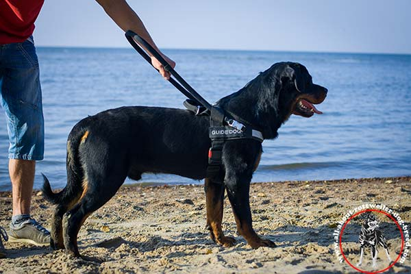 Multitasking nylon Rottweiler guide harness with removable long handle