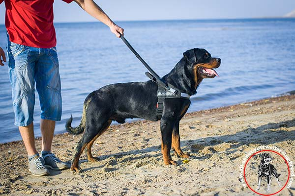 Nylon dog harness for Rottweiler with comfy hard handle