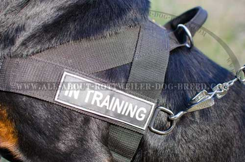 Easy-To-Attach ID Patches and Side D-Ring on Nylon Dog Harness