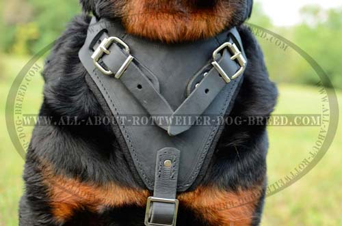 Thick Felt Padded Chest Plate of Training Leather Rottweiler Harness