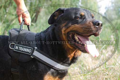 Handy Rottweiler Dog Nylon Harness for Training