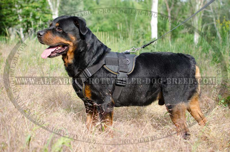 Get Nylon Rottweiler Pulling Harness | Chest Plate | Walks | Training