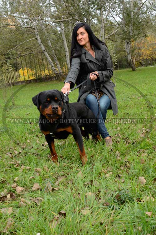 Easy-to-use Rottweiler Dog Leather Harness