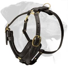 Strong Rottweiler Leather Harness