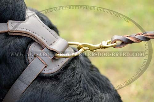 Exquisite Studded Leather Dog Harness