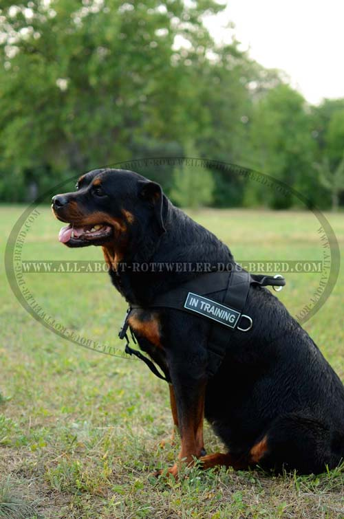 Excellent Nylon Rottweiler Harness for Different Activities