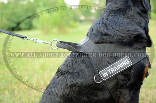 ID Patches and Nickel Rings on Quality Nylon Dog Harness