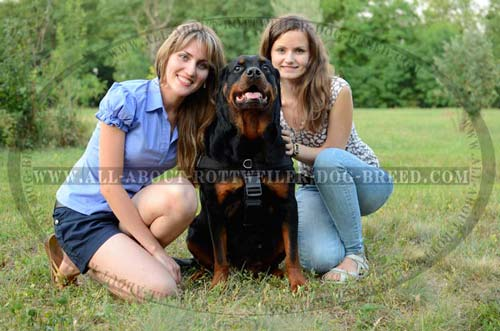All Weather Nylon Rottweiler Harness with Patches