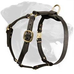 Gorgeous Light Rottweiler Dog Harness