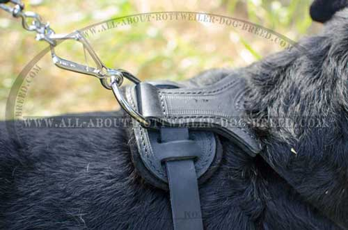 Rottweiler Padded Leather Harness for Training