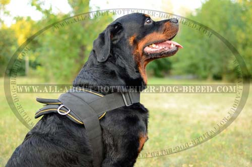 Comfortable Rottweiler Dog Harness