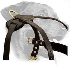 Leather Rottweiler Harness Equipped with Brass D-Rings