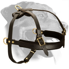 Leather Rottweiler Harness Equipped with Soft Chest Padding
