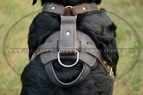 Back Plate with Handle and D-Ring of Training Leather Dog Harness