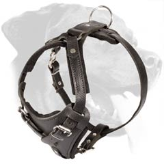 Leather Dog Harness with Padded Plated and Straps