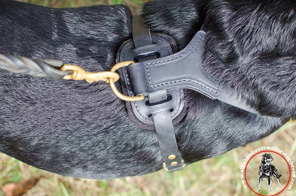 Spiked leather Rottweiler harness with back plate
