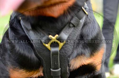 Exclusive Design Chest Plate of Leather Dog Harness