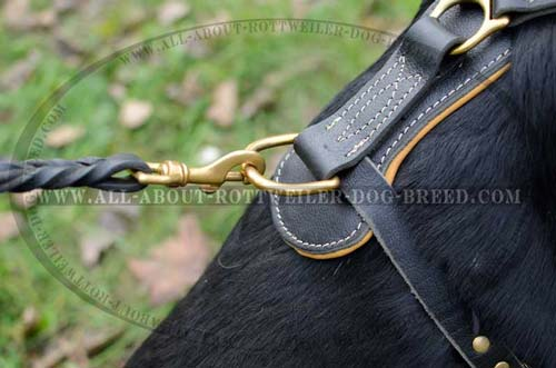 Exclusive Rottweiler Leather Dog Harness