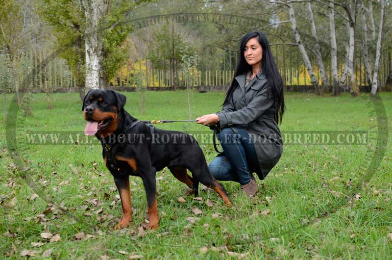 Dog Rottweiler Training 1000+ images about #Ro...
