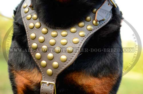 Exclusive Leather Canine Harness for Your Rottweiler