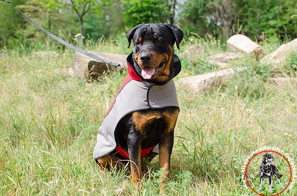 Dog coat for Rottweiler walking