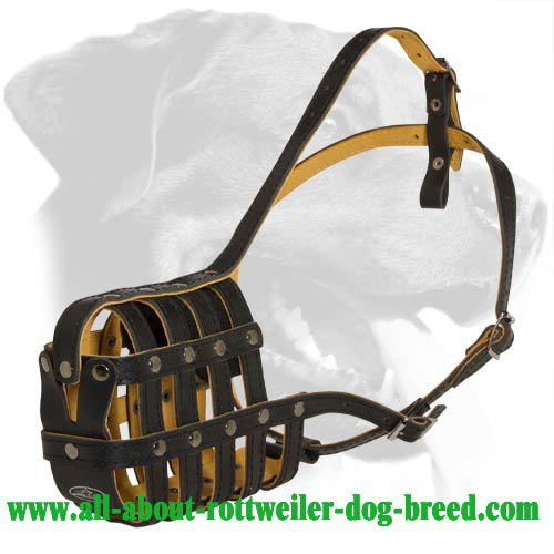 Royal Nappa Padded Basket Leather Rottweiler Muzzle for Every Day