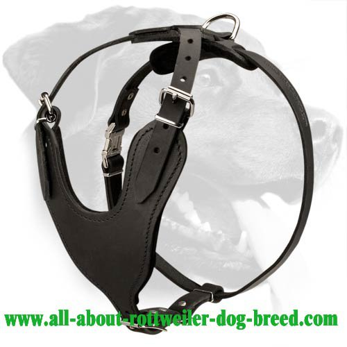Heavy Duty Leather Harness for Rottweiler